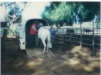 thumbnail of 19840000-babe-delivery_to_steiners_ranch-01.jpg