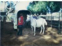 thumbnail of 19840000-babe-delivery_to_steiners_ranch-02.jpg
