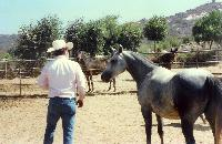 thumbnail of 19870724-after_hazz_birth-at_steiners_ranch-01.jpg