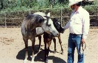 thumbnail of 19870724-after_hazz_birth-at_steiners_ranch-02.jpg
