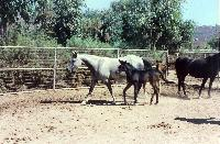 thumbnail of 19870724-after_hazz_birth-at_steiners_ranch-04.jpg
